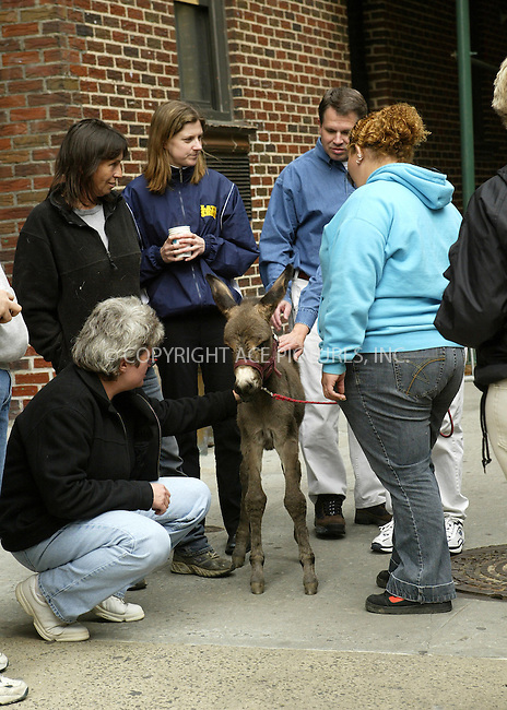 WWW.ACEPIXS.COM . . . . .  ....NEW YORK, MAY 4, 2005....An animal guest arrives for an appearance on The Late Show with David Letterman.....Please byline: Ian Wingfield - ACE PICTURES..... *** ***..Ace Pictures, Inc:  ..Craig Ashby (212) 243-8787..e-mail: picturedesk@acepixs.com..web: http://www.acepixs.com