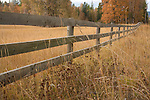 Montana, Western, Whitefish. A fence through tall grasses in autumn.