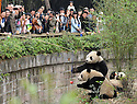 VISITORS AT THE CHENGDU PANDA BREEDING AND RESEARCH CENTRE, SICHUAN, CHINA. 14/3/13. PICTURE BY CLARE KENDALL 07971 477316