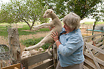 Linda Dufurrena grabs a leppy (orphan) lamb during feeding at Dufurrena Ranch