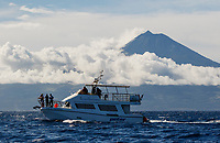 WQ70318-D. Whale watching boat with Mount Pico in the background. Whale and dolphin watching ecotourism has long been popular here, with more than a dozen species of cetaceans regularly sighted. Sperm Whales (Physeter macrocephalus) are often the star of the show. Pico Island, Azores, Portugal, Atlantic Ocean.<br /> Photo Copyright © Brandon Cole. All rights reserved worldwide.  www.brandoncole.com
