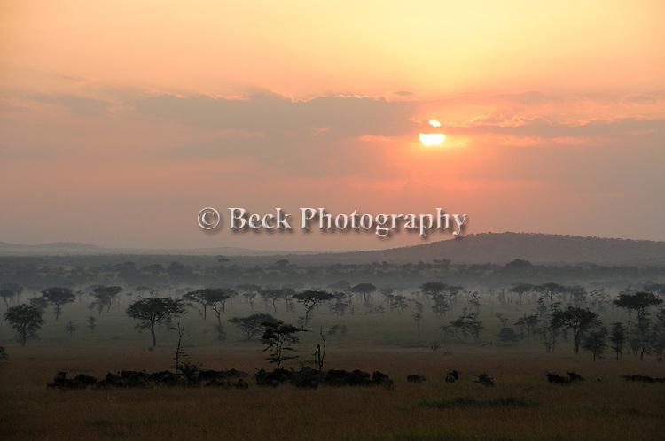 Africa Serengeti National Park misty morning Widebeest