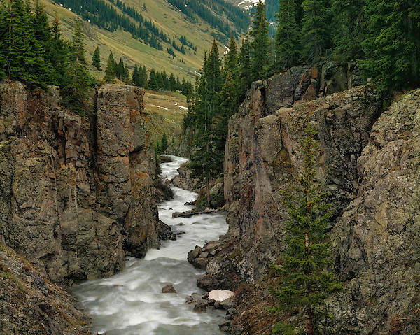 Las Animas River in the San Juan Mountains, Silverton, Colorado, USA .  John leads wildflower photo tours into American Basin and throughout Colorado. All-year long. .  John leads private photo tours throughout Colorado. Year-round Colorado photo tours.