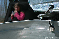 Sugar maple tree sap dripping into sap bucket