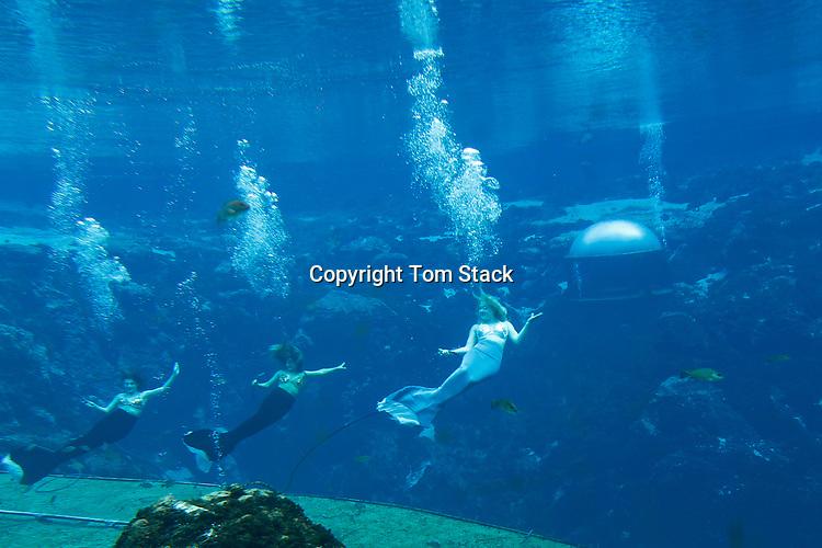 Mermaids performing underwater at Weeki Wachee Springs State Park