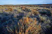 Sagebrush habitat of the Gunnison Sage-Grouse. Gunnison County, Colorado. April.