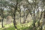 Mediterranean Woodland, Sierra Morena, Andalucia, Spain, near Los Escoriales