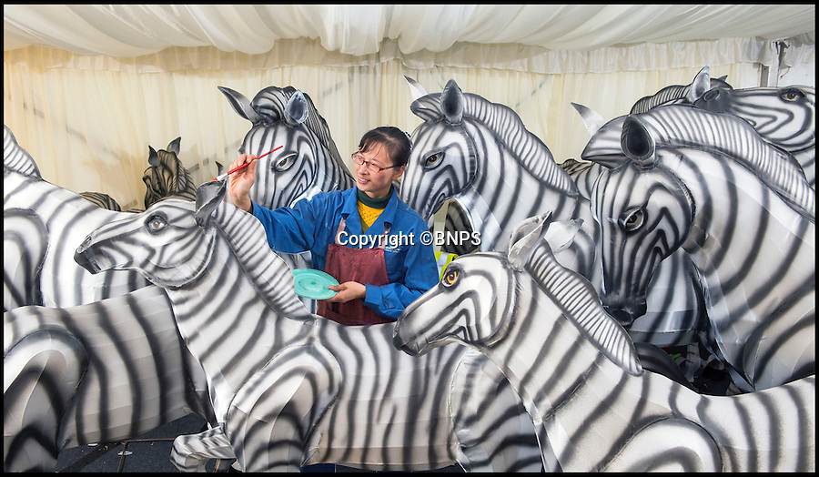 BNPS.co.uk (01202 558833)<br /> Pic: PhilYeomans/BNPS<br /> <br /> Skilled artists from Zigong put the finishing touches to a herd of Zebra.<br /> <br /> Pictured: Tian-Cong Yu. <br /> <br /> The largest Chinese 'Festival of Light' seen in Europe is taking shape at the Longleat House in Wiltshire - A small army of over 50 skillled workers have flown in from the remote village of Zigong in central China to create the stunning spectacle.<br /> <br /> Among the different scenes are a 20-metre tall Chinese temple, a 70-metre-long dragon, created using more than 10,000 porcelain cups, bowls, plates and dishes, and the mythical qilin – a chimerical hooved creature with the head of a lion – featuring more than 30,000 glass phials filled with coloured liquid.<br /> <br /> Massive traditional Chinese masks are also featured and there is also a bamboo forest which is home to a family of life-size pandas, giant elephants, zebras, lions and deer as well as giant lotus flowers floating on the lake.<br /> <br /> Filled with thousands of LED lights and handmade by a team of 50 highly-skilled craftsmen from Zigong in China's Sichuan province, the lanterns recreate a magical world of myths and legends.<br /> <br /> Set amid the beautiful backdrop of the landscaped grounds and gardens surrounding Longleat House, the lit structures also spill out on to Half Mile Lake to create a stunning and enchanting experience for visitors.<br /> <br /> It's the first time a festival of this size has taken place in the UK and the Chinese team behind the spectacular event believe its size and complexity make it unique throughout Europe.