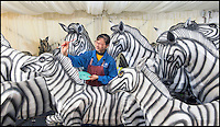 BNPS.co.uk (01202 558833)<br /> Pic: PhilYeomans/BNPS<br /> <br /> Skilled artists from Zigong put the finishing touches to a herd of Zebra.<br /> <br /> Pictured: Tian-Cong Yu. <br /> <br /> The largest Chinese 'Festival of Light' seen in Europe is taking shape at the Longleat House in Wiltshire - A small army of over 50 skillled workers have flown in from the remote village of Zigong in central China to create the stunning spectacle.<br /> <br /> Among the different scenes are a 20-metre tall Chinese temple, a 70-metre-long dragon, created using more than 10,000 porcelain cups, bowls, plates and dishes, and the mythical qilin &ndash; a chimerical hooved creature with the head of a lion &ndash; featuring more than 30,000 glass phials filled with coloured liquid.<br /> <br /> Massive traditional Chinese masks are also featured and there is also a bamboo forest which is home to a family of life-size pandas, giant elephants, zebras, lions and deer as well as giant lotus flowers floating on the lake.<br /> <br /> Filled with thousands of LED lights and handmade by a team of 50 highly-skilled craftsmen from Zigong in China's Sichuan province, the lanterns recreate a magical world of myths and legends.<br /> <br /> Set amid the beautiful backdrop of the landscaped grounds and gardens surrounding Longleat House, the lit structures also spill out on to Half Mile Lake to create a stunning and enchanting experience for visitors.<br /> <br /> It&rsquo;s the first time a festival of this size has taken place in the UK and the Chinese team behind the spectacular event believe its size and complexity make it unique throughout Europe.