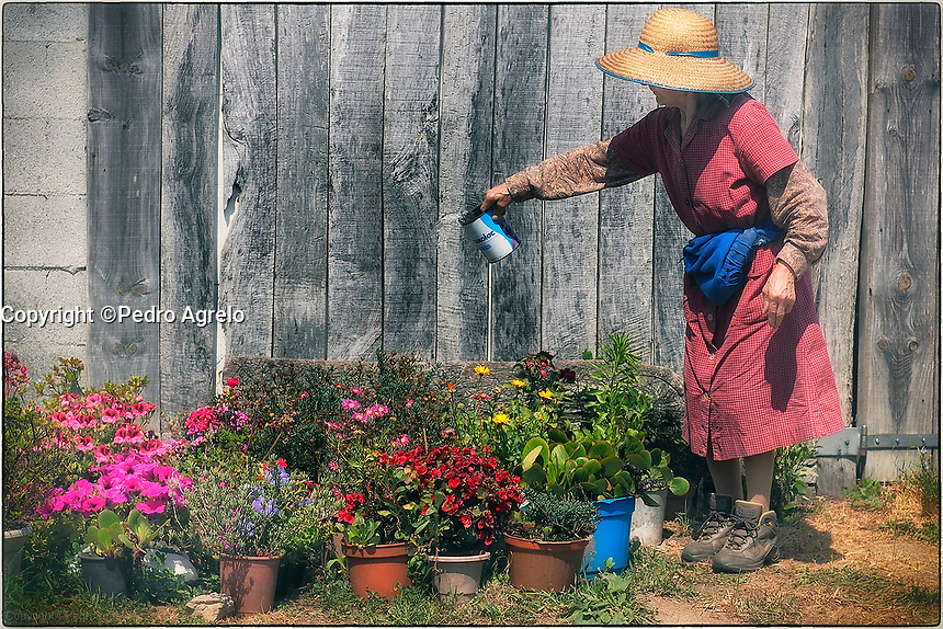 Fecha: 24-06-2015.-  Señora Maria de Palas de Rei riega las plantas.