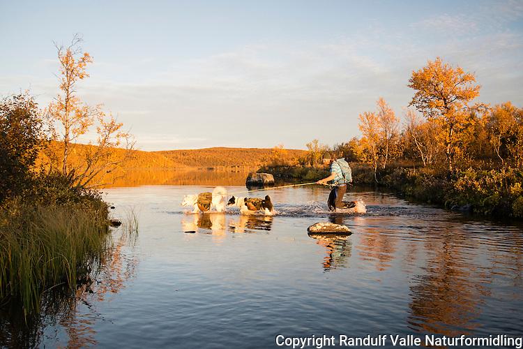 Mann går fottur med grønlandshunder ---- Man hiking with greenland dogs