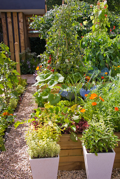 Raised bed of vegetables, herbs, flowers, including squash, salvia, beet, lettuce, tomatoes calendula