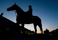 LOUISVILLE, KY - MAY 01: Horses head to the track and get baths on a busy Tuesday morning during Kentucky Derby week at Churchill Downs on May 1, 2018 in Louisville, Kentucky. (Photo by Scott Serio/Eclipse Sportswire/Getty Images)