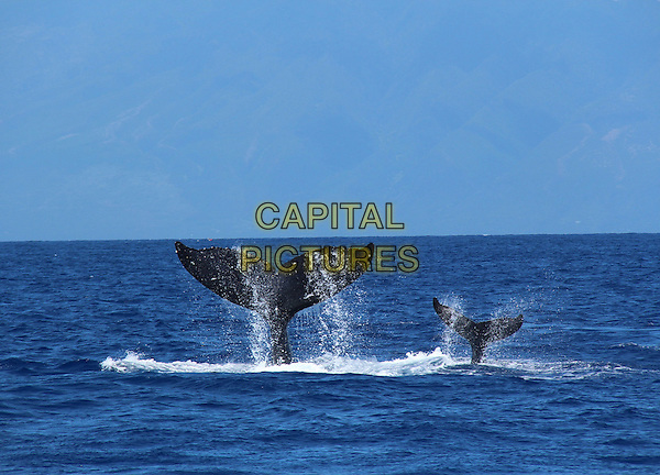 SCENE<br /> in Humpback Whales (2015)  <br /> *Filmstill - Editorial Use Only*<br /> CAP/NFS<br /> Image supplied by Capital Pictures