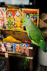 Fortune-telling parrots, Brickfields, the Indian quarter of Kuala Lumpur.
