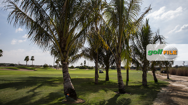 5th fairway, The Track at The Meydan Golf Club, Dubai, United Arab Emirates.  31/01/2016. Picture: Golffile | David Lloyd<br /> <br /> All photos usage must carry mandatory copyright credit (&copy; Golffile | David Lloyd)