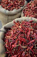 Asie/Inde/Rajasthan/Udaipur : Marché Mandi - Etal de piments rouges séchés