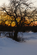 The silhouette of a tree at sunset during the winter months. Located at Wagon Hill Farm in Durham, New Hampshire USA which is part of scenic New England.