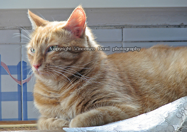 A ginger tabby cat rests by a window.