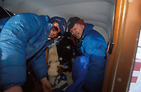 Pilot Loads Dropped Dogs in Plane Elim Chkpt Iditarod 99 AK Ken Moon