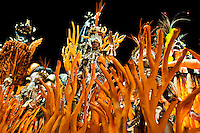 Dancers of Mocidade samba school perform atop a float during the Carnival parade at the Sambadrome in Rio de Janeiro, Brazil, 20 February 2012. The Carnival in Rio de Janeiro, considered the biggest carnival in the world, is a colorful, four day celebration, taking place every year forty days before Easter. The Samba school parades, featuring thousands of dancers, imaginative costumes and elaborate floats, are held on the Sambadrome, a purpose-built stadium in downtown Rio. According to costumes, flow, theme, band music quality and performance, a single school is declared the winner of the competition.