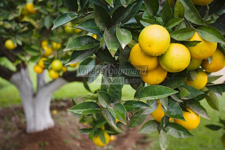Afrique/Afrique du Nord/Maroc/Rabat: Hotel - Maison d'Hote Villa Mandarine l'orangeraie du parc