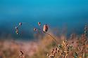 Autumn Finch