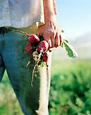USA, California, Organic farmer holding radishes in field, Fort Jones