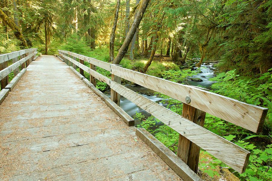 Bridge over Lillian Creek, Elwah River valley, Olympic National Park, Washington