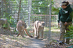 Big Cat Rescue Staff & Cougars