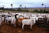 Amazon, Brazil. Cattle ranch on land which was previously rainforest.