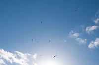 Skyscape 0012