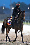 November 1, 2018: Athena (IRE), trained by Aidan P. O'Brien, exercises in preparation for the Breeders' Cup Filly & Mare Turf at Churchill Downs on November 1, 2018 in Louisville, Kentucky. Alex Evers/Eclipse Sportswire/CSM