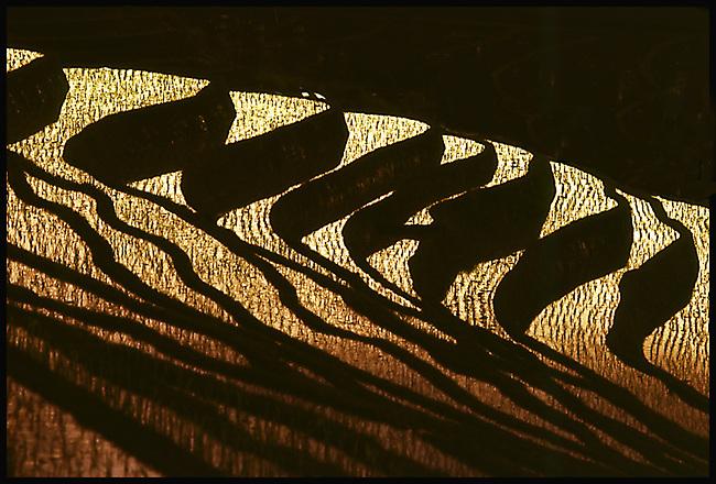 Bali rice fields at sunset