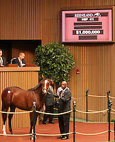 Hip #41 Street Cry - Tizso colt sold for $1,000,000 at the Keeneland September Yearling Sale.  September 10, 2012.