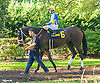 Milaya before The Winter Melody Stakes at Delaware Park on 9/15/16