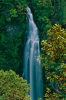 Madrone and Barr Creek Falls<br /> Rogue River Valley<br />   near Prospect<br /> Cascade Range,  Oregon