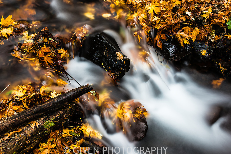 Starvation Creek, autumn leaves, Columbia Gorge, Oregon