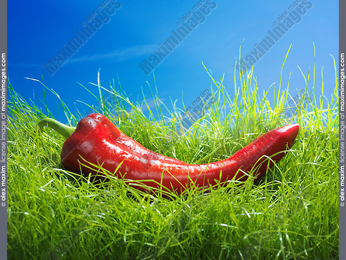 Long Sweet Pepper Italian Red Marconi on green grass under blue sky artistic food still life