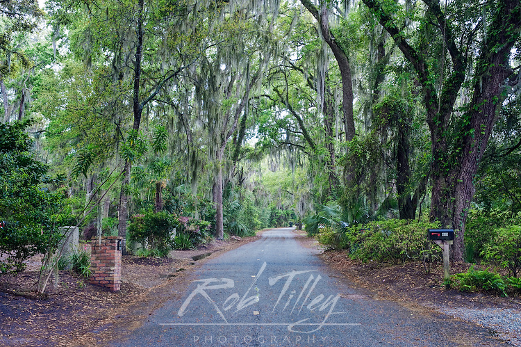 USA, GA, St. Simmons Island, Live Oaks and Spanish Moss on Residential Street