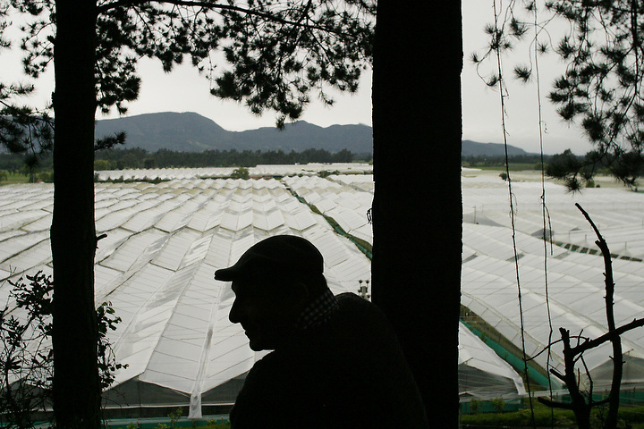 BOGOTA, COLOMBIA -- NOVEMBER 3: Peter Beyfus, manager of Alpes Flowers in Bogota looks over his flower farm on November 3, 2003.  (Photo by Dennis Drenner/Aurora). .
