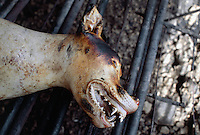 Korea. South Korea. Kimje area. Dog slaughter house. Dead dog. Worker has burned dog 's fang using a blowlamp to get a better deep freezing preservation. Dog meat is a delicatessen of korean traditionnal cooking. © 2002 Didier Ruef