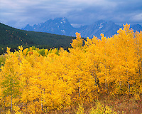 Fall color below the Teton Range at Oxbow Bend; Grand Teton National Park, WY