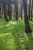 France, île de la Réunion, Parc national de La Réunion, classé Patrimoine Mondial de l'UNESCO, anse des Cascades, cocotiers // France, Reunion island (French overseas department), Parc National de La Reunion (Reunion National Park), listed as World Heritage by UNESCO, Anse des Cascades, Palm trees