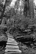 A Cedar Plank Trail created to give people a view of the ancient forests of Clayoquot Valley.
