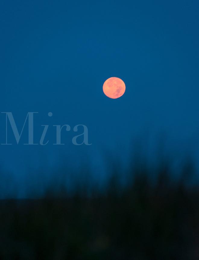 Moon over dune.