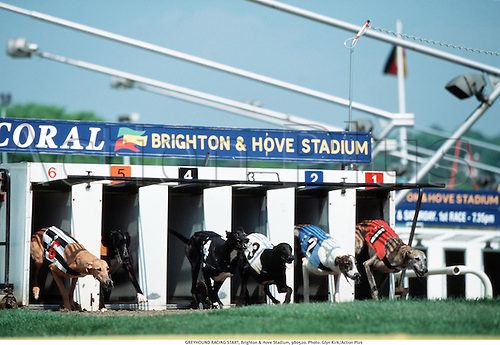 GREYHOUND RACING START, Brighton & Hove Stadium, 980520. Photo: Glyn Kirk/Action Plus...1998.greyhound racing.dogs dog.