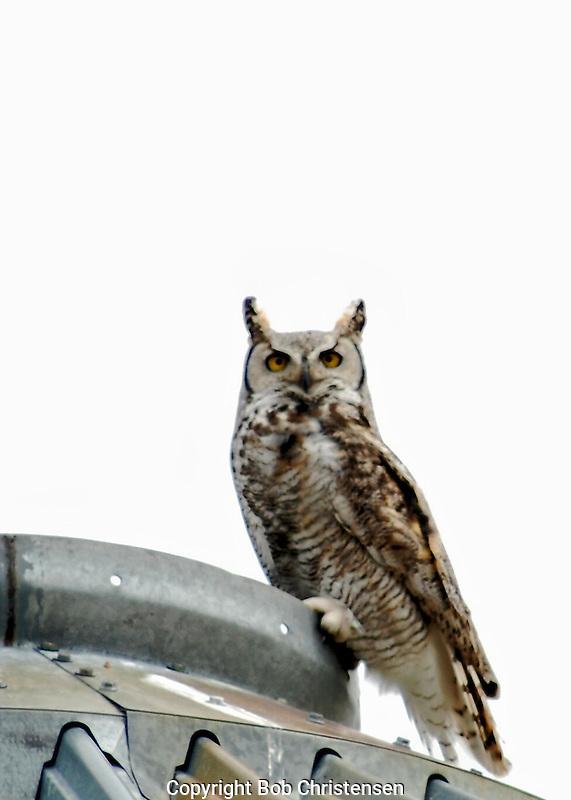 Photos of Montana birds