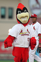 Palm Beach Cardinals mascot during an on field promotion running the bases during a game against the Fort Myers Miracle at Roger Dean Stadium on May 1, 2012 in Jupiter, Florida.  Palm Beach defeated Fort Myers 9-3.  (Mike Janes/Four Seam Images)