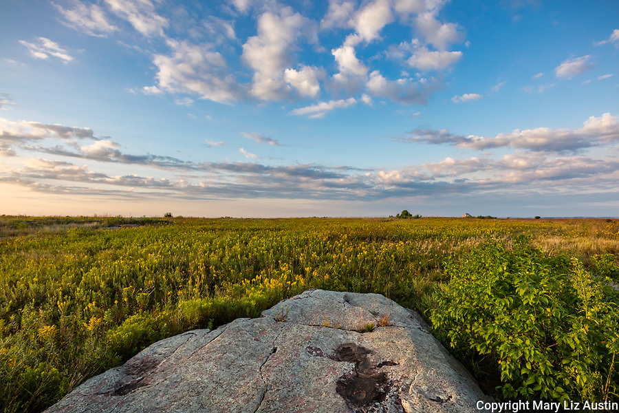 Blue Mound State Park, Minnesota: Sioux quartziet and field of goldenrod (Solidago speciosa) at sunrise in summer